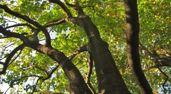 """""""Addomesticare"""" gli alberi"""