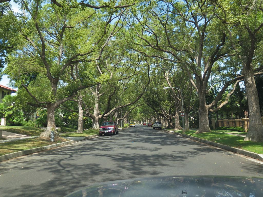 Viale con alberi correttamente potati