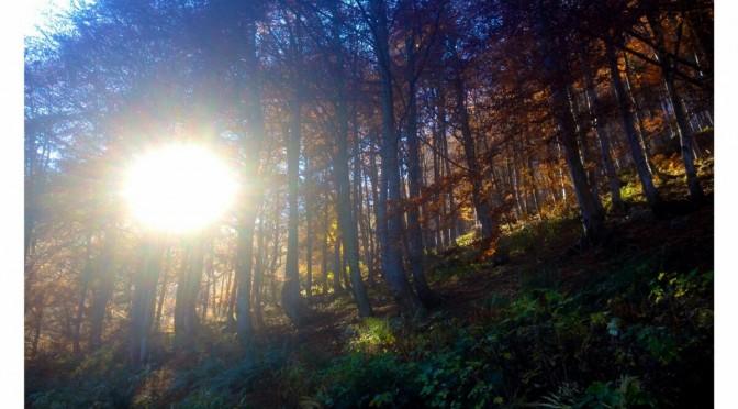 Il bosco del sorriso
